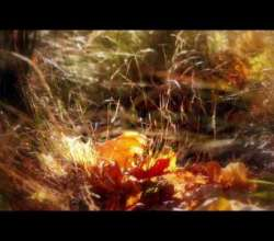 Embedded thumbnail for Мелодии Эрнесто Кортазара