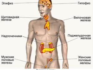 Консультация эндокринолога